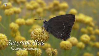 Download Los Secretos de las Mariposas - Butterflies secrets Video