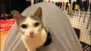 Download DIY Cat Tent Video