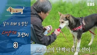 Download 세상에 나쁜 개는 없다 - 살기 위해 도망친 사냥개 호선이 #003 Video