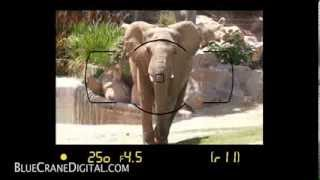 Download Introduction to the Nikon D5300: Basic Controls Video