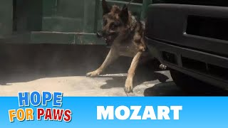 Download Security guards rush to help Hope For Paws rescue a homeless German Shepherd. Video