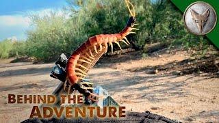 Download A Centipede's Venomous Bite! Video
