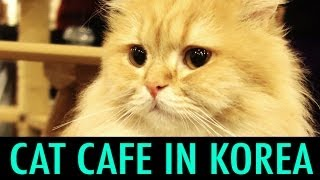 Download Cat Cafe in Myeondong, Korea (KWOW #141) Video