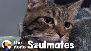 Download A Stray Sick Kitten Walked Into Family's Life | The Dodo Soulmates Video