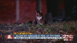 Download Boy Scratched By Rabies Infected Feral Cat Video