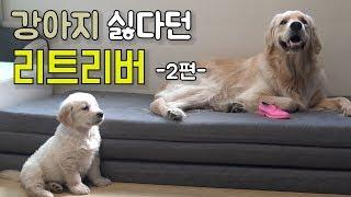 Download 처음본 남의 새끼강아지가 싫은 리트리버 하오! 2탄공개!(feat.친해지길바래) Video