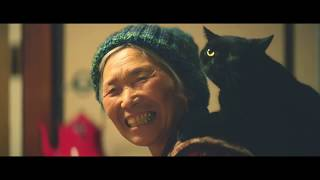 Download 偷偷學習的貓 [日本催淚的貓咪廣告 ~中文字幕] Video