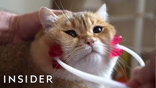 Download 31 Pets Products For Animal Lovers | The Ultimate List Video