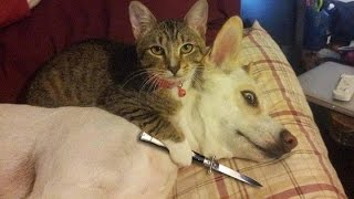 Download Funny Cats vs Dogs Compilation Video