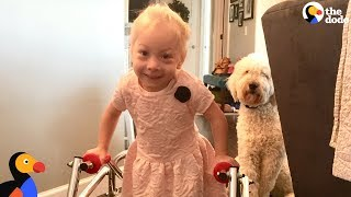 Download Dog Was SO Proud When Her Human Sister Finally Walked | The Dodo Video