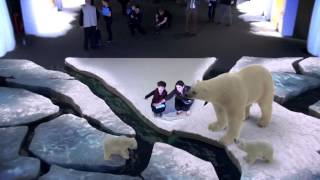 Download WWF - Coca-Cola Arctic Home Campaign - Augmented Reality | WWF Video