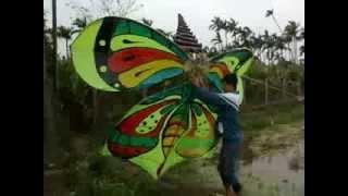 Download diều sáo hải phương (con bướm) Video