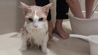 Download 고양이를 물에 담갔더니 멍멍이가 되었어요 Video