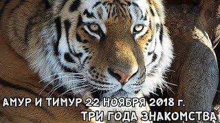 Download АМУР И ТИМУР 22 НОЯБРЯ 2018 Г. ТРИ ГОДА ЗНАКОМСТВА Video