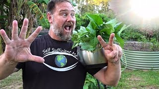 Download 7 Top Vegetables EASY to Grow in a HOT Summer Video