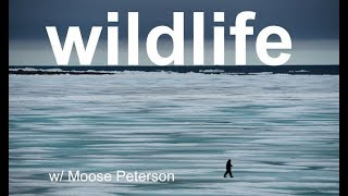 Download Wildlife Photo Review with MOOSE PETERSON! Video