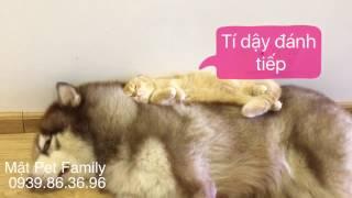 Download Mât vs Mon đánh nhau , bị chủ phạt - Mật Pet Family Video