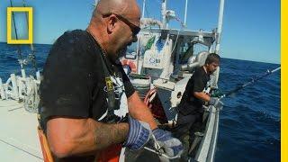Download Catch of the Week - Tuna Trifecta | Wicked Tuna Video