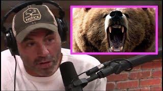 Download Joe Rogan STUNNED By Bear Attack Story Video