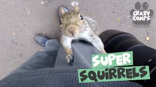 Download Squirrels are Jerks Compilation 2018 - Funny Squirrel Videos 😂 Video