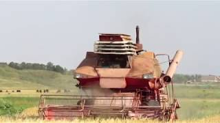 Download Колос Ск-6 в поле , уборочная 2018. Kolos SK-6 in the field, the harvest of 2018. Video