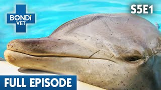 Download 🐬 Dolphin May Have Cancer | S05E01 | Bondi Vet Video