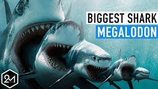 Download Top 10 Unbelievable Facts About The Biggest Shark Ever : Megalodon Video
