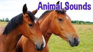 Download Animal Sounds for Children (20 Amazing Animals) Video