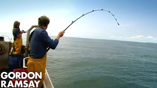 Download Fishing for Conger Eel - Gordon Ramsay Video