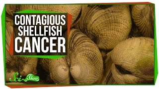 Download Solar-Powered Plane and Contagious Shellfish Cancer Video
