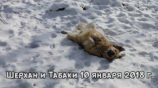 Download ТИГР И СОБАКА - ЛУЧШИЕ ДРУЗЬЯ. 10 ЯНВАРЯ 2018 Г. Video