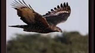 Download Shatta Wale – Am An Eagle (Audio Slide) Video