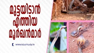 Download Cobras came for laying eggs | Snake Master | Kaumudy TV Video