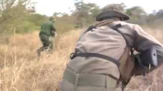Download Curbing Poaching: Anti-Poaching Efforts Gain Momentum In S.Africa Video