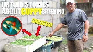 Download UNTOLD STORY ABOUT GUPPY BREEDING TECHNIQUES! Video