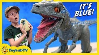 Download Raptor Blue & Surprise Egg Dinosaurs! Jurassic World Fallen Kingdom Alpha Training Blue Toy Dinosaur Video