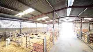 Download Bull To Beef Farming Video