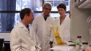 Download UC Santa Cruz Banana Slug Genome Project Video