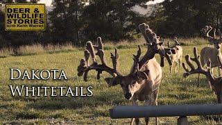 Download Big Bucks of Ohio | ″Dakota Whitetails″ Video