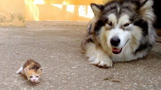 Download Cute is Not Enough - Funny Cats and Dogs Compilation #261 Video