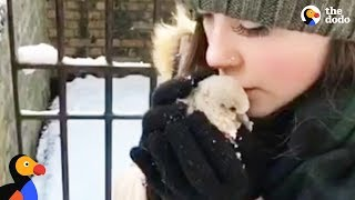 Download Baby Pigeon Rescued by Couple In A Snowstorm | The Dodo Video