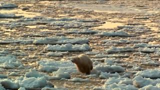 Download Arctic Tale - Trailer Video