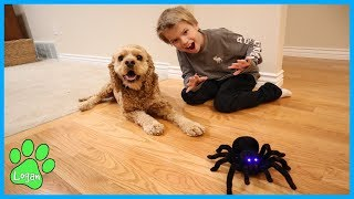 Download Cute Dog vs RC Spider Tarantula / Logan The Adventure Dog Video