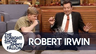 Download Robert Irwin's Baby Porcupine Finds a Home on Jimmy's Lap Video