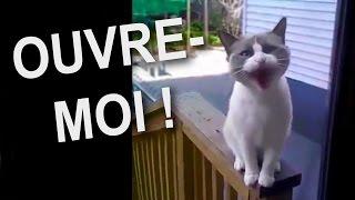 Download OUVRE-MOI - PAROLE DE CHAT Video