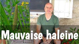 Download Mauvaise haleine, halitose : quelles plantes utiliser ? Video