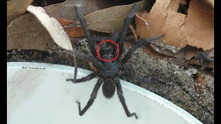 Download 14 DEADLIEST SPIDER BITES Video