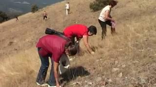 Download Picking of iva grass on Ozren mountain Video