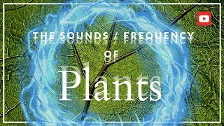 Download The Secret Frequency of Plants! ~432 Hz (MIND BLOWING!) Video