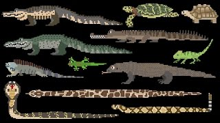 Download Reptiles - Snakes, Lizards, Crocodilians & Turtles - The Kids' Picture Show (Fun & Educational) Video